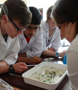 Students took a closer look at pond life during the science conference.