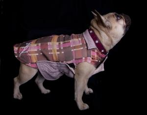 Kay Nove's unique idea was to clothes for dogs that also matched with their owner's wardrobe.
